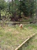 Perro en bosque Foto de archivo