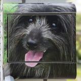 Perro en buzón Foto de archivo libre de regalías