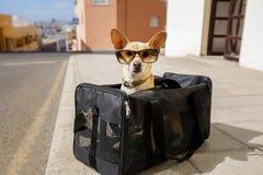 Perro en caja del transporte o bolso listo para viajar imagenes de archivo