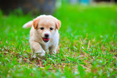 Perro en campo de hierba verde del verano. Imagenes de archivo