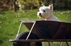 Perro en carro Fotos de archivo