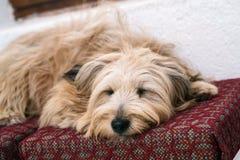 Perro en casa Imagenes de archivo