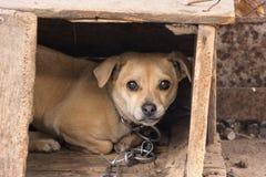 Perro en caseta de perro Imagenes de archivo