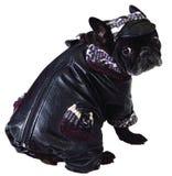 Perro en casquillo y capa Fotografía de archivo libre de regalías
