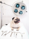 Perro en clínica veterinaria cerca de la herramienta médica Imagen de archivo