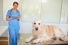 Perro en clínica del veterinario Fotografía de archivo