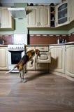 Perro en cocina Imagen de archivo