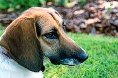 Perro en color Imagen de archivo libre de regalías