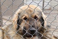 Perro en concepto del cautiverio Foto de archivo libre de regalías