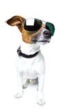Perro en cortinas Fotografía de archivo libre de regalías