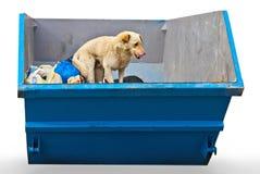 Perro en cubo de basura Fotos de archivo