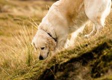 Perro en declive fotos de archivo libres de regalías