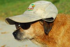 Perro en disfraz Foto de archivo libre de regalías