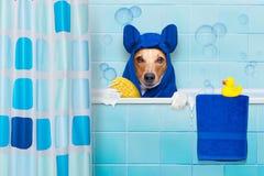Perro en ducha imagen de archivo libre de regalías