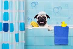 Perro en ducha fotografía de archivo libre de regalías