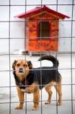 Perro en el abrigo animal Foto de archivo libre de regalías