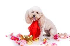 Perro en el ajuste festivo chino del Año Nuevo en el fondo blanco Imagenes de archivo