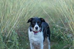 Perro en el arbusto imagen de archivo libre de regalías