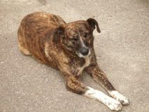 Perro en el asfalto Fotos de archivo libres de regalías
