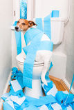 Perro en el asiento de inodoro Fotografía de archivo