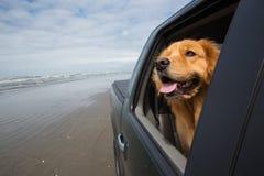 Perro en el asiento trasero Imagen de archivo libre de regalías