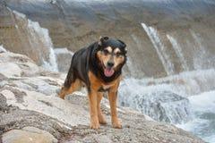 Perro en el banco de una presa del río Fotos de archivo