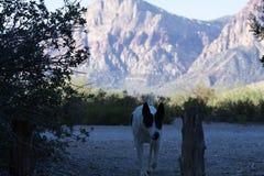 Perro en el barranco rojo Nevada Fotografía de archivo libre de regalías