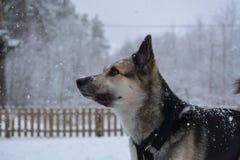 Perro en el beautifull de la nieve Fotos de archivo