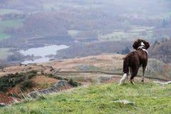 Perro en el borde Foto de archivo libre de regalías