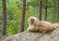Perro en el borde del acantilado Foto de archivo libre de regalías