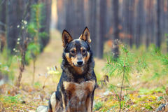 Perro en el bosque Imágenes de archivo libres de regalías