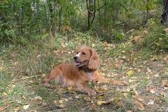 Perro en el bosque imagen de archivo libre de regalías