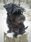 Perro en el bosque del invierno imagen de archivo libre de regalías