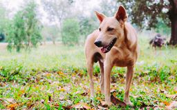 Perro en el bosque tropical verde Foto de archivo