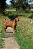 Perro en el camino Imagen de archivo libre de regalías