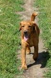 Perro en el camino Fotografía de archivo libre de regalías