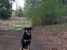 Perro en el camino Fotografía de archivo