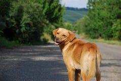 Perro en el camino Imagen de archivo