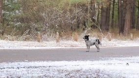 Perro en el camino en invierno almacen de video