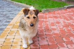Perro en el camino peatonal foto de archivo libre de regalías