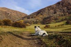 Perro en el campo Fotografía de archivo libre de regalías