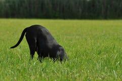 Perro en el campo de hierba Imágenes de archivo libres de regalías