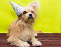 Perro en el casquillo imágenes de archivo libres de regalías