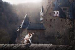 Perro en el castillo gótico Un pequeño terrier en un lugar místico imagen de archivo libre de regalías