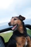 Perro en el coche Fotos de archivo libres de regalías