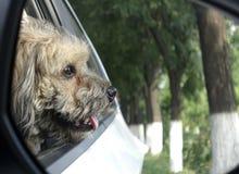 Perro en el coche atraído por el exterior del paisaje foto de archivo libre de regalías