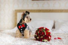 Perro en el cuarto Imagen de archivo libre de regalías