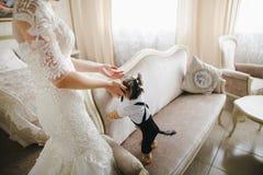Perro en el cuarto de la novia Imagen de archivo libre de regalías