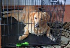 Perro en el embalaje para el entrenamiento de la casa Imágenes de archivo libres de regalías