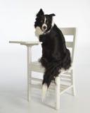 perro en el escritorio Imágenes de archivo libres de regalías